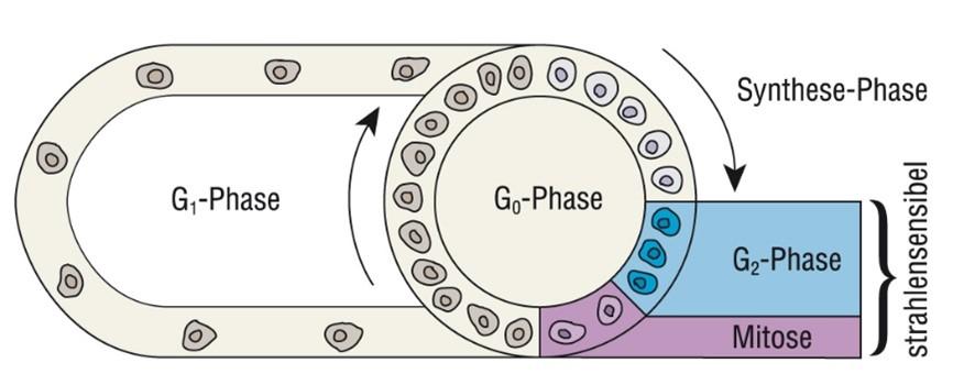 G-Phase
