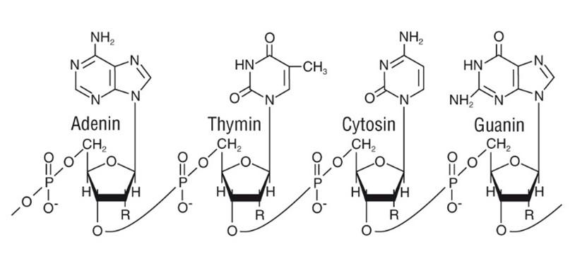 Schematische Struktur einer DNS