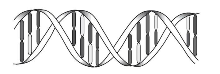 komplementäre DNS-Stränge