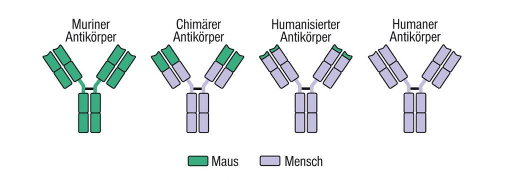 Chimäre und rekombinant-humanisierte AK